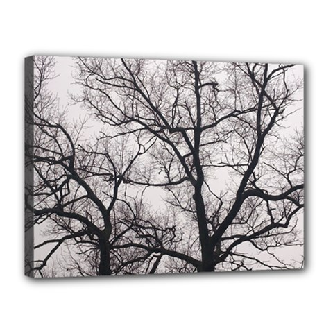 Tree Canvas 16  x 12  (Framed)