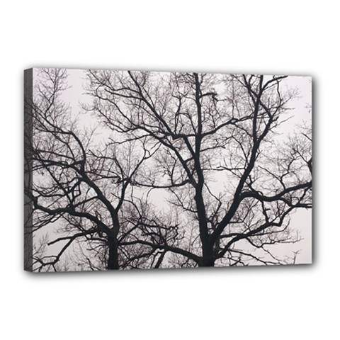 Tree Canvas 18  x 12  (Framed)
