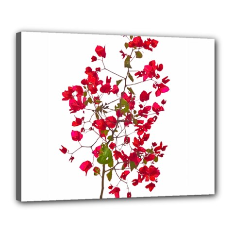 Red Petals Canvas 20  x 16  (Framed)