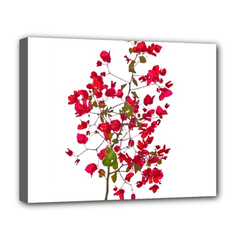 Red Petals Deluxe Canvas 20  x 16  (Framed)