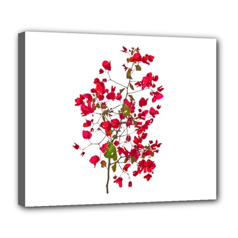 Red Petals Deluxe Canvas 24  X 20  (framed)
