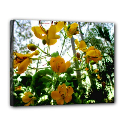 Yellow Flowers Canvas 14  x 11  (Framed)