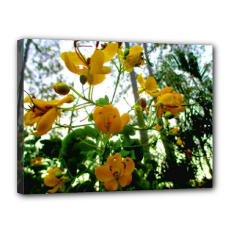 Yellow Flowers Canvas 16  x 12  (Framed)