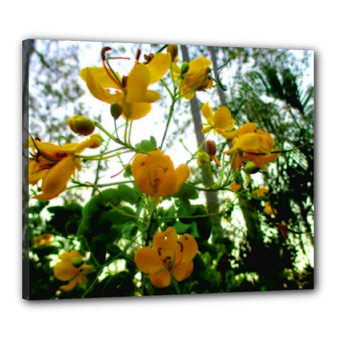 Yellow Flowers Canvas 24  x 20  (Framed)