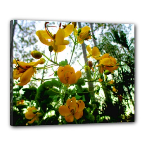 Yellow Flowers Canvas 20  X 16  (framed)