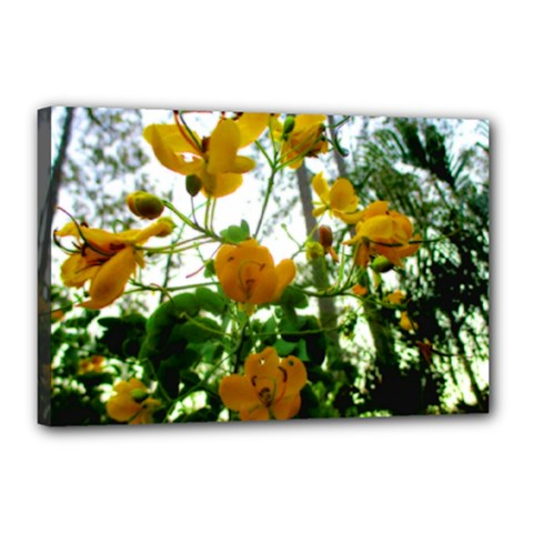 Yellow Flowers Canvas 18  x 12  (Framed)