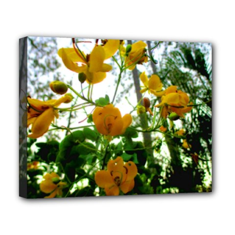 Yellow Flowers Deluxe Canvas 20  X 16  (framed)