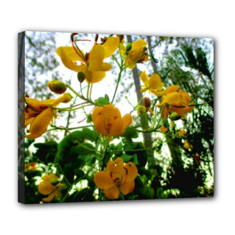 Yellow Flowers Deluxe Canvas 24  x 20  (Framed)