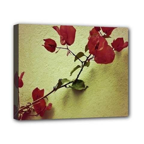 Santa Rita Flower Canvas 10  x 8  (Framed)