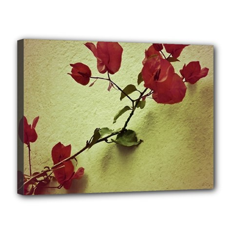 Santa Rita Flower Canvas 16  x 12  (Framed)