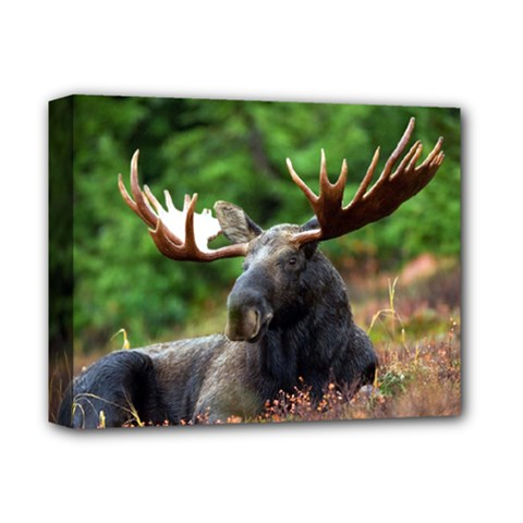 Majestic Moose Deluxe Canvas 14  X 11  (framed)