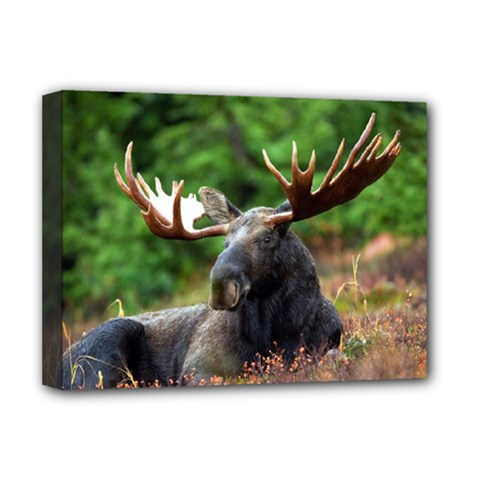 Majestic Moose Deluxe Canvas 16  X 12  (framed)