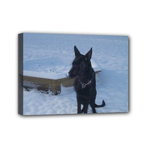 Snowy Gsd Mini Canvas 7  x 5  (Framed)