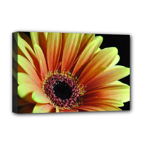 Yellow Orange Gerbera Daisy Deluxe Canvas 18  X 12  (framed)