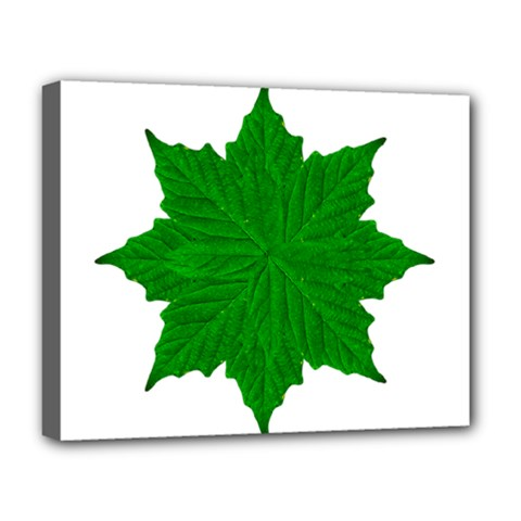 Decorative Ornament Isolated Plants Deluxe Canvas 20  x 16  (Framed)