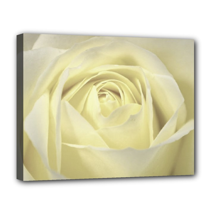 Cream Rose Canvas 14  x 11  (Framed)