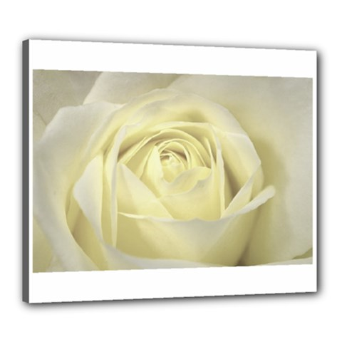 Cream Rose Canvas 24  x 20  (Framed)