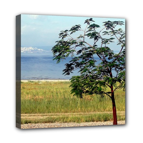 Sea Of Galilee Mini Canvas 8  x 8  (Framed)