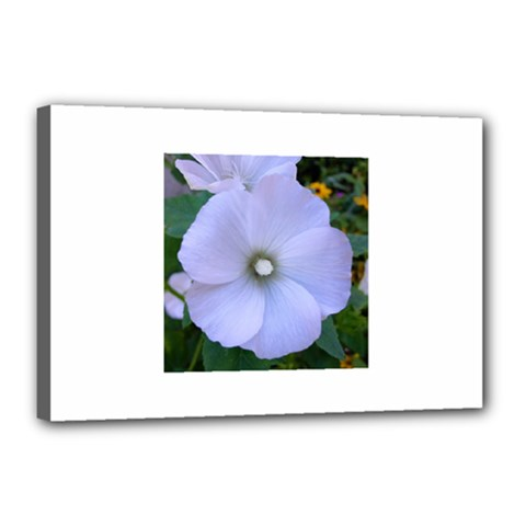 Moon Flower Canvas 18  x 12  (Framed)