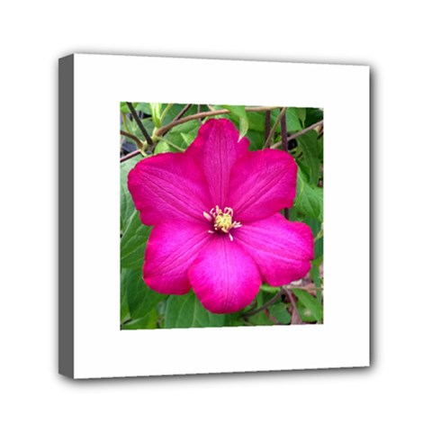 Clem Pink Mini Canvas 6  X 6  (framed)