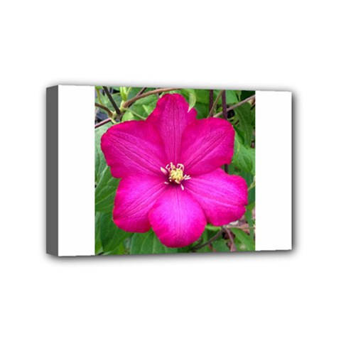 Clem Pink Mini Canvas 6  x 4  (Framed)