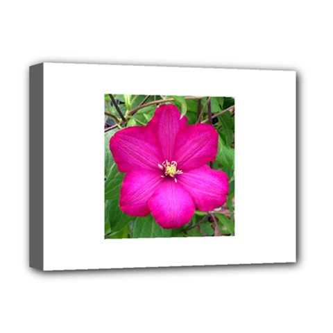 Clem Pink Deluxe Canvas 16  X 12  (framed)