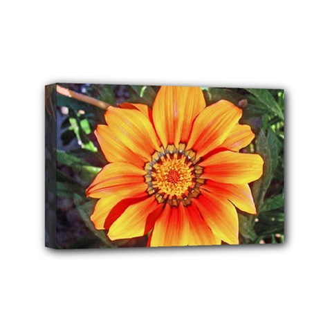 Flower In A Parking Lot Mini Canvas 6  X 4  (framed)
