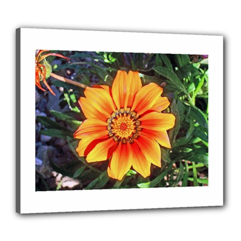 Flower In A Parking Lot Canvas 24  x 20  (Framed)