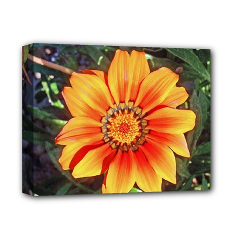 Flower In A Parking Lot Deluxe Canvas 14  x 11  (Framed)
