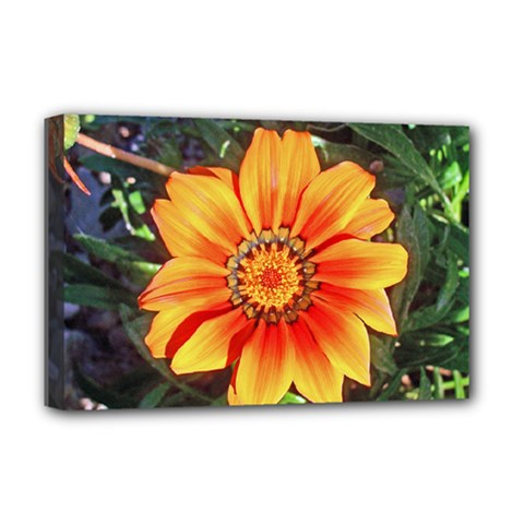 Flower In A Parking Lot Deluxe Canvas 18  x 12  (Framed)