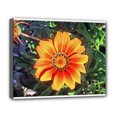 Flower In A Parking Lot Deluxe Canvas 20  X 16  (framed)