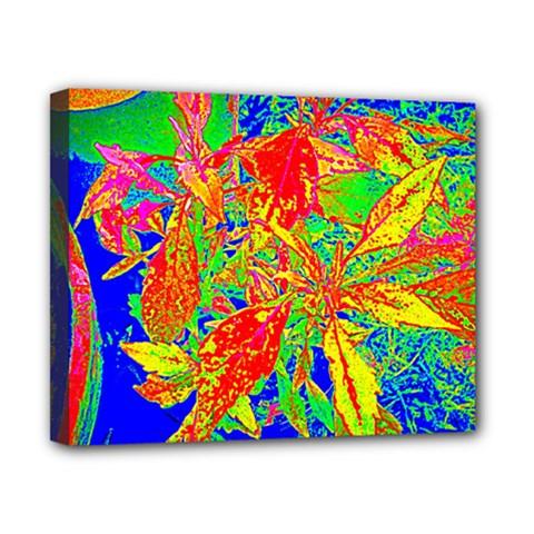 Sun Coleus Enhanced Canvas 10  X 8  (framed)