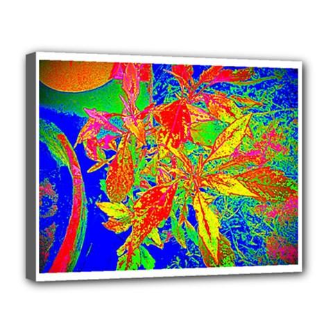Sun Coleus Enhanced Canvas 14  X 11  (framed)