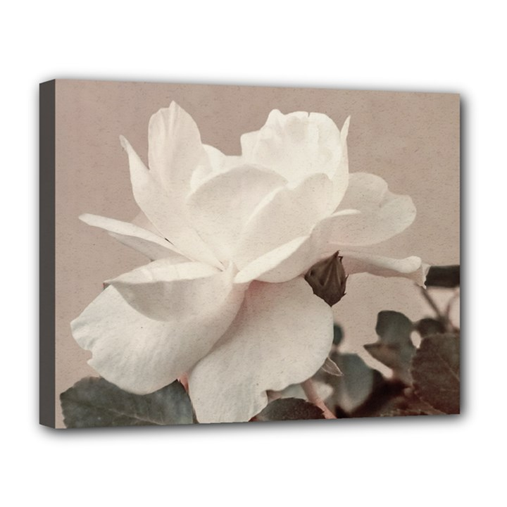 White Rose Vintage Style Photo in Ocher Colors Canvas 14  x 11  (Framed)