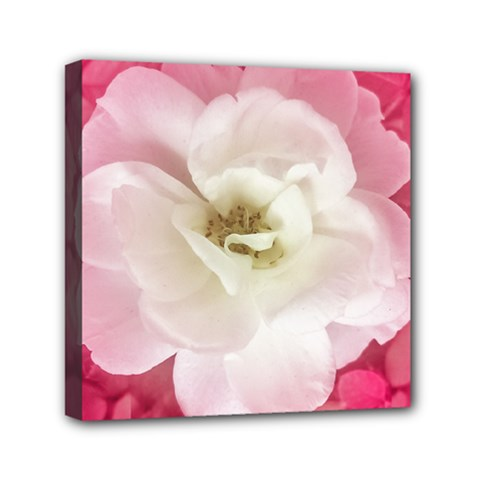 White Rose With Pink Leaves Around  Mini Canvas 6  X 6  (framed)