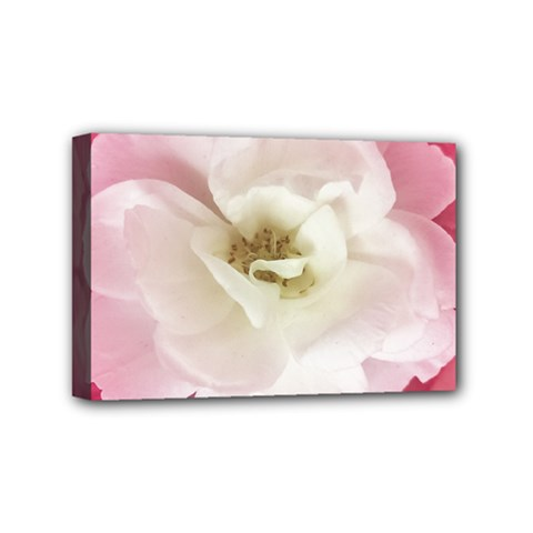 White Rose With Pink Leaves Around  Mini Canvas 6  X 4  (framed)