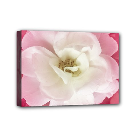 White Rose With Pink Leaves Around  Mini Canvas 7  X 5  (framed)