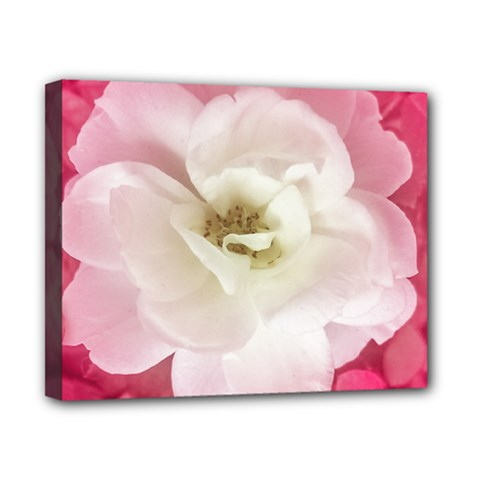 White Rose With Pink Leaves Around  Canvas 10  X 8  (framed)