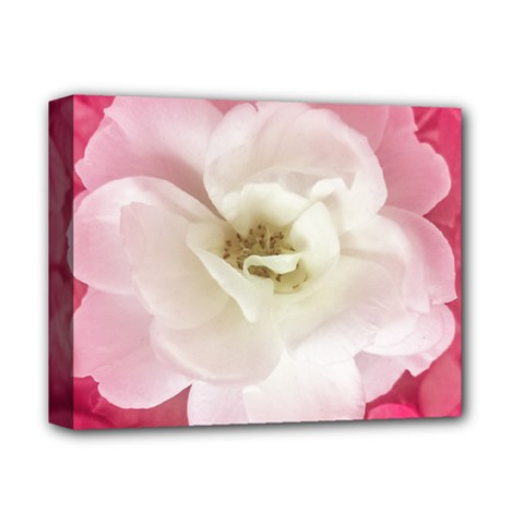 White Rose With Pink Leaves Around  Deluxe Canvas 14  X 11  (framed)