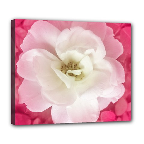 White Rose with Pink Leaves Around  Deluxe Canvas 24  x 20  (Framed)