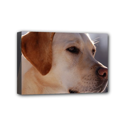 3 Labrador Retriever Mini Canvas 6  x 4  (Framed)