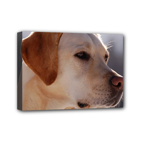 3 Labrador Retriever Mini Canvas 7  x 5  (Framed)