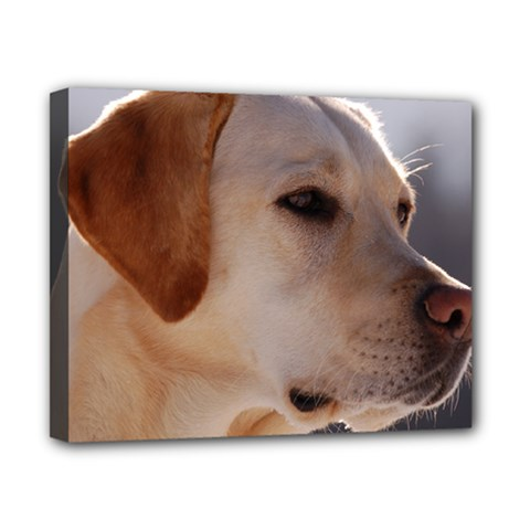 3 Labrador Retriever Canvas 10  x 8  (Framed)