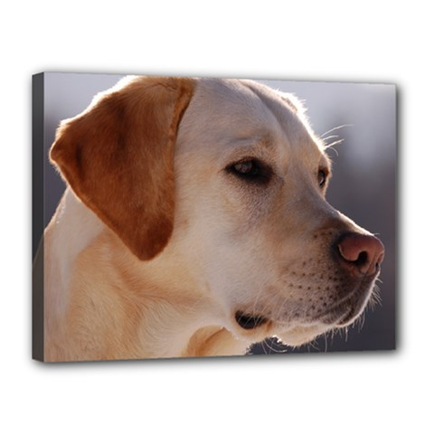 3 Labrador Retriever Canvas 16  x 12  (Framed)