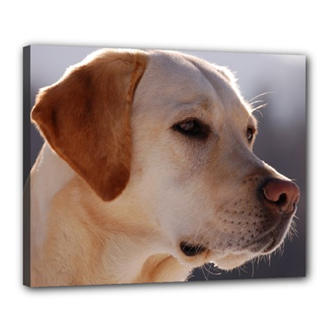 3 Labrador Retriever Canvas 20  x 16  (Framed)