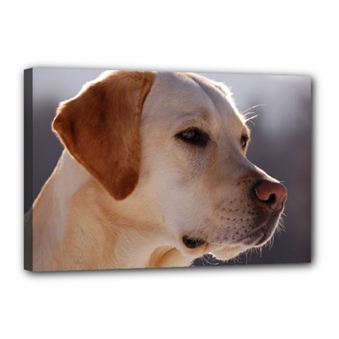 3 Labrador Retriever Canvas 18  x 12  (Framed)