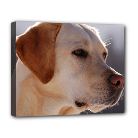 3 Labrador Retriever Deluxe Canvas 20  x 16  (Framed)