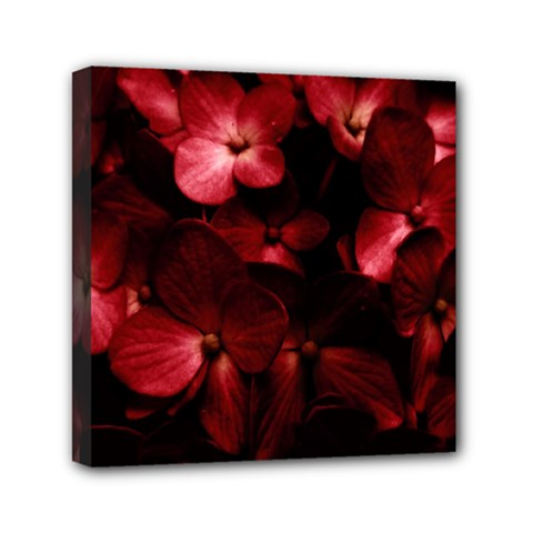 Red Flowers Bouquet In Black Background Photography Mini Canvas 6  X 6  (framed)