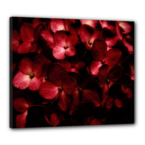 Red Flowers Bouquet in Black Background Photography Canvas 24  x 20  (Framed)