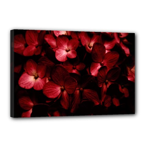 Red Flowers Bouquet in Black Background Photography Canvas 18  x 12  (Framed)